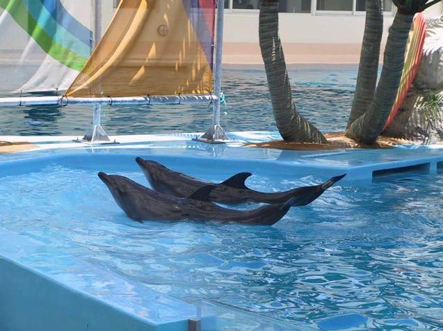 台湾首创海洋生态互动式主题乐园,在占地10公顷的主题乐园区部分